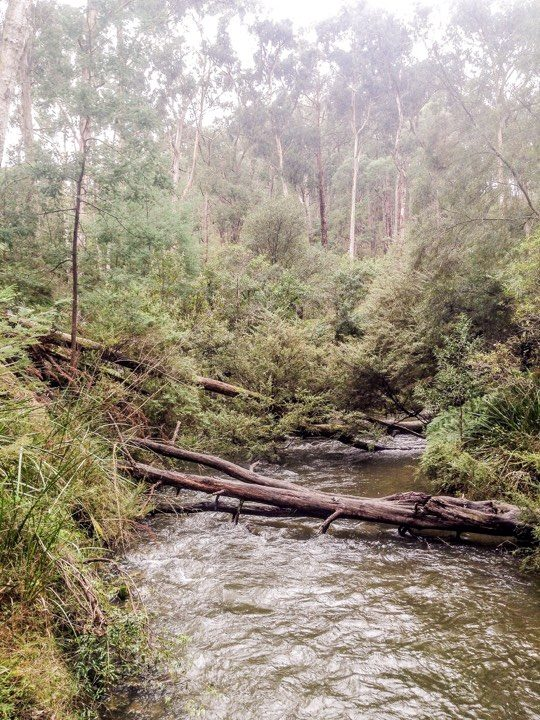 end of forest walk river .jpg