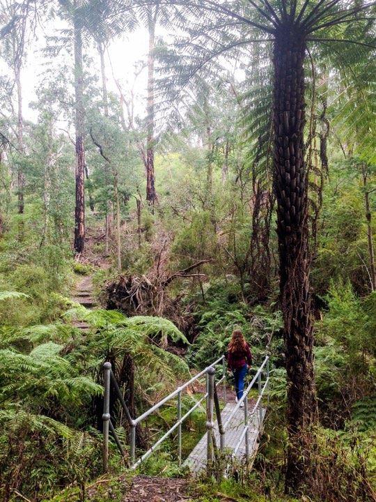 forest walk .jpg